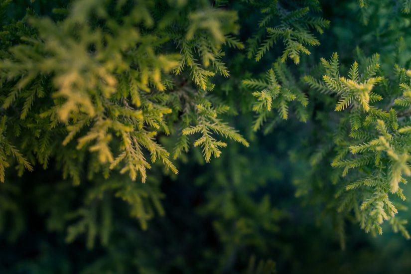 green-tree-macro-photography-668282.jpg